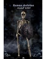 Coomodel NOBS011 1/6 Scale Human Skeleton (DIECAST ALLOY)